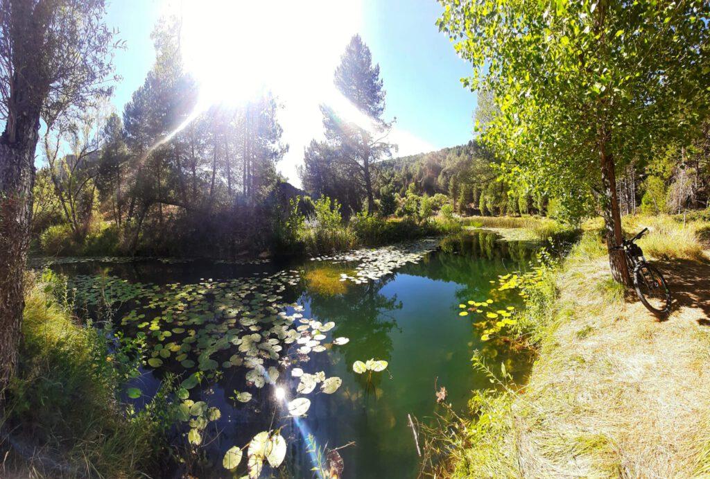 Nenúfares en un remanso del Río Lobos